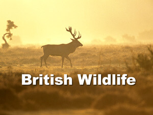 Britih wildlife talk title slide