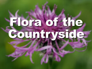 Flora of the countryside opening titles