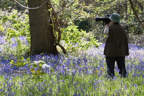 Jacky taking pictures of a Bluebell wood in Berkshire