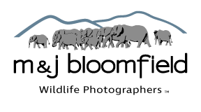 M and J Bloomfield logo