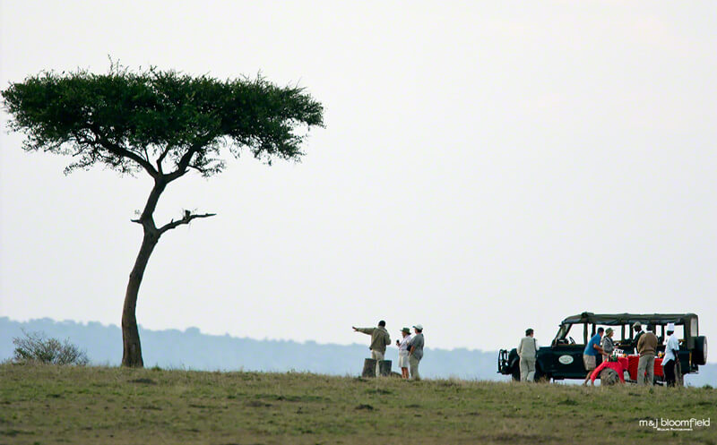 Tourists having breakfast under an Acacia tree in Kenya's Masai Mara